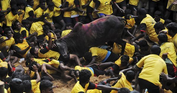 Seven killed at jallikattu events across Tamil Nadu
