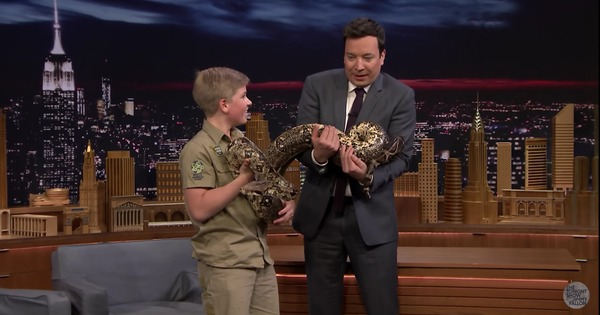 Watch: A crocodile, an armadillo, a constrictor, a sloth and a 13-year-old boy walk into a TV studio