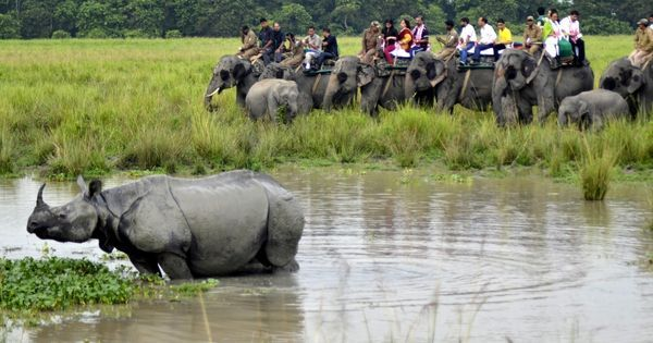 BBC banned from Indian tiger reserves after its film on anti-poaching policy in Kaziranga: TOI