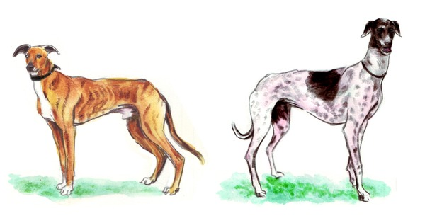 Dogs are charming us everywhere now, but where were they in India's history?