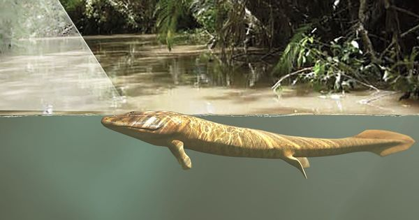 Watch: How did our ancestors make the leap from water to land? It was the eyes and not the limbs