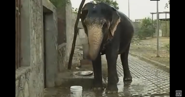 Watch: Elephants, too, are forced to go thirsty after a severe water shortage in Amer, Rajasthan