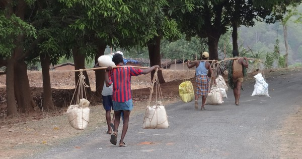 The fruits of India's National Food Security law are finally showing on the ground
