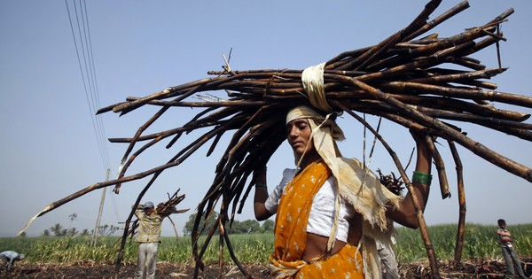 Centre likely to announce Rs 8,000-crore relief package for sugarcane farmers: Reports