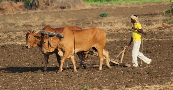 Is Maharashtra really serious about coming to the aid of its drought-hit farmers?