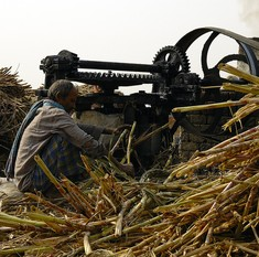 In parched Marathwada, farmers are finally turning away from water-intensive sugarcane