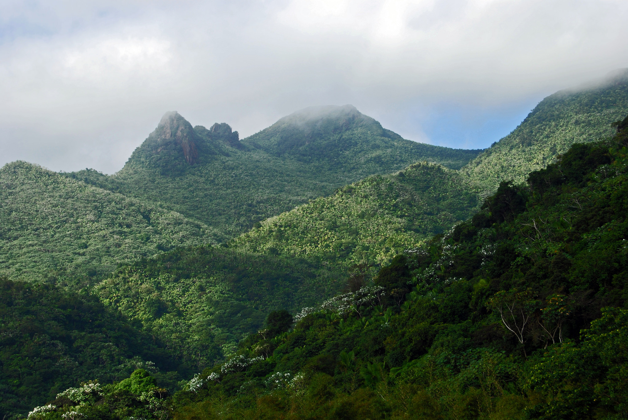 Puerto Rico's El Yunque National Forest in 2014, before this year's hurricanes damaged the forest canopy. Photo credit: Harvey Barrison/via Flickr [Licensed under CC BY 2.0]