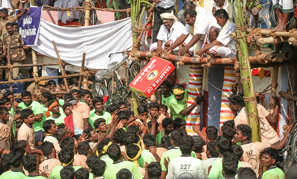 An LED television is given as a prize at Alanganallur. As the sport has grown over the years, so have the prizes – organisers now tap sponsors to arrange expensive prizes, including sometimes cars and bikes, for the winning bull tamers.