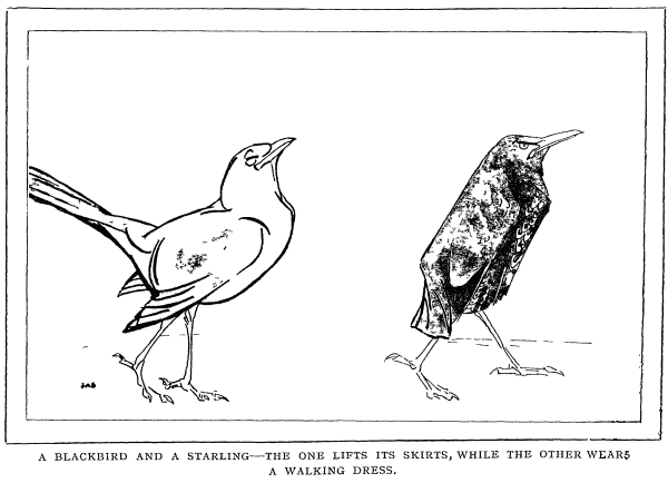 Illustration from EH Aitken's 'Concerning Animals and Other Matters'