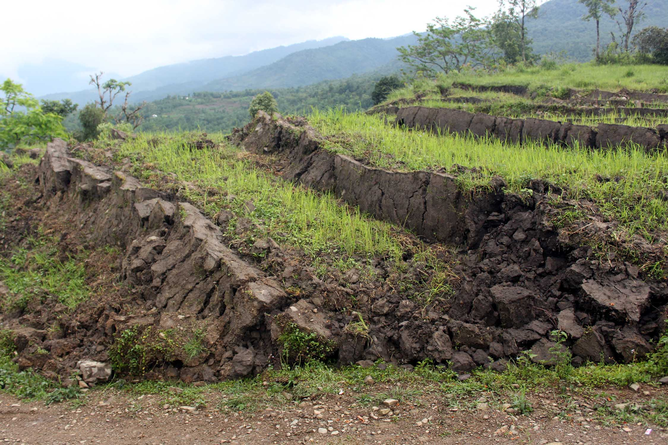 Sinking paddy fields in Kalikhola village.