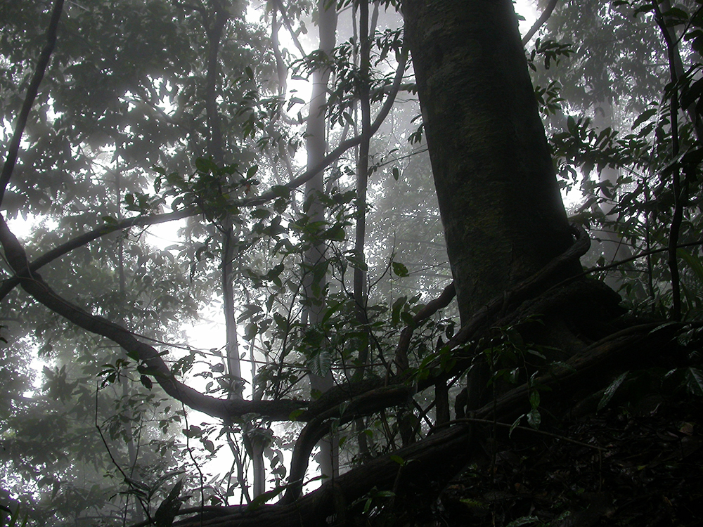 A forest in the Western Ghats. Photo credit: Gurukula Botanical Sanctuary Archives