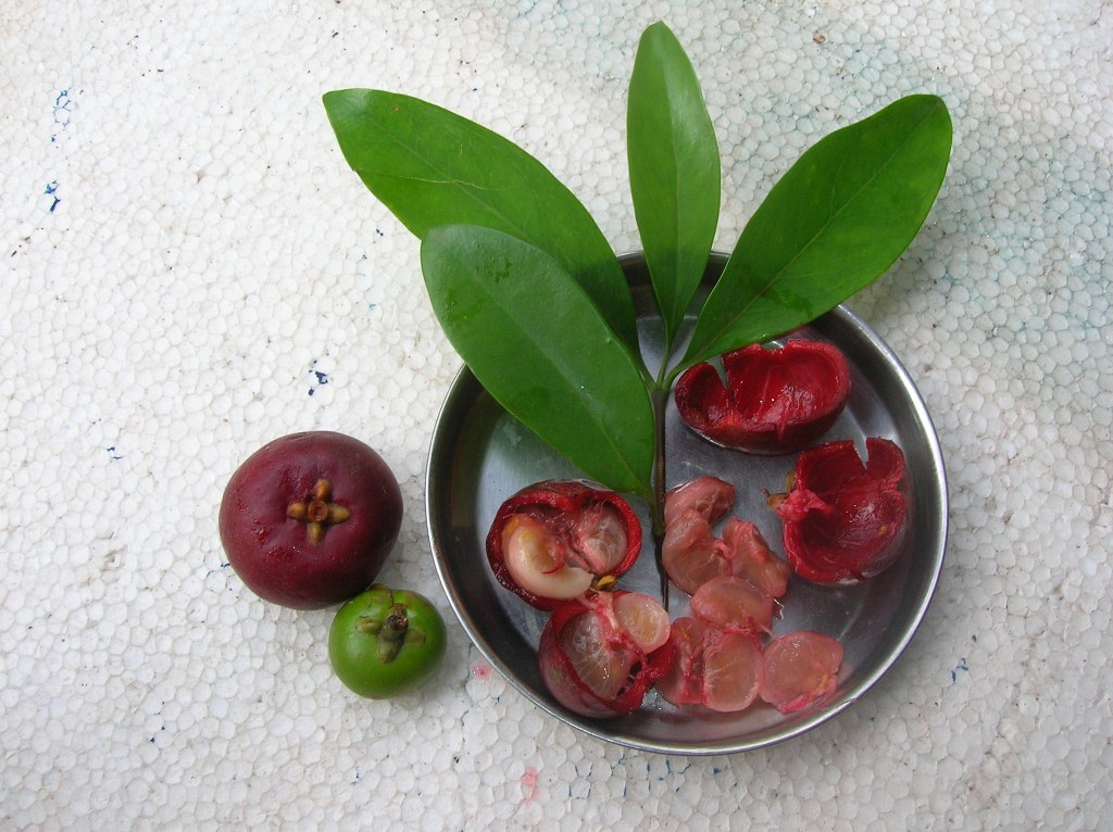 Kokum fruit. Photo credit: Subray Hegde/Wikimedia Commons [Creative Commons Attribution 1.0 Generic licence]