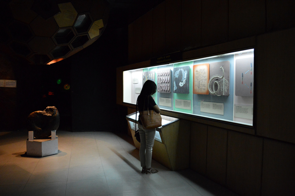 A visitor looking at an exhibit on evolution. Credit: Apoorv Tiwary