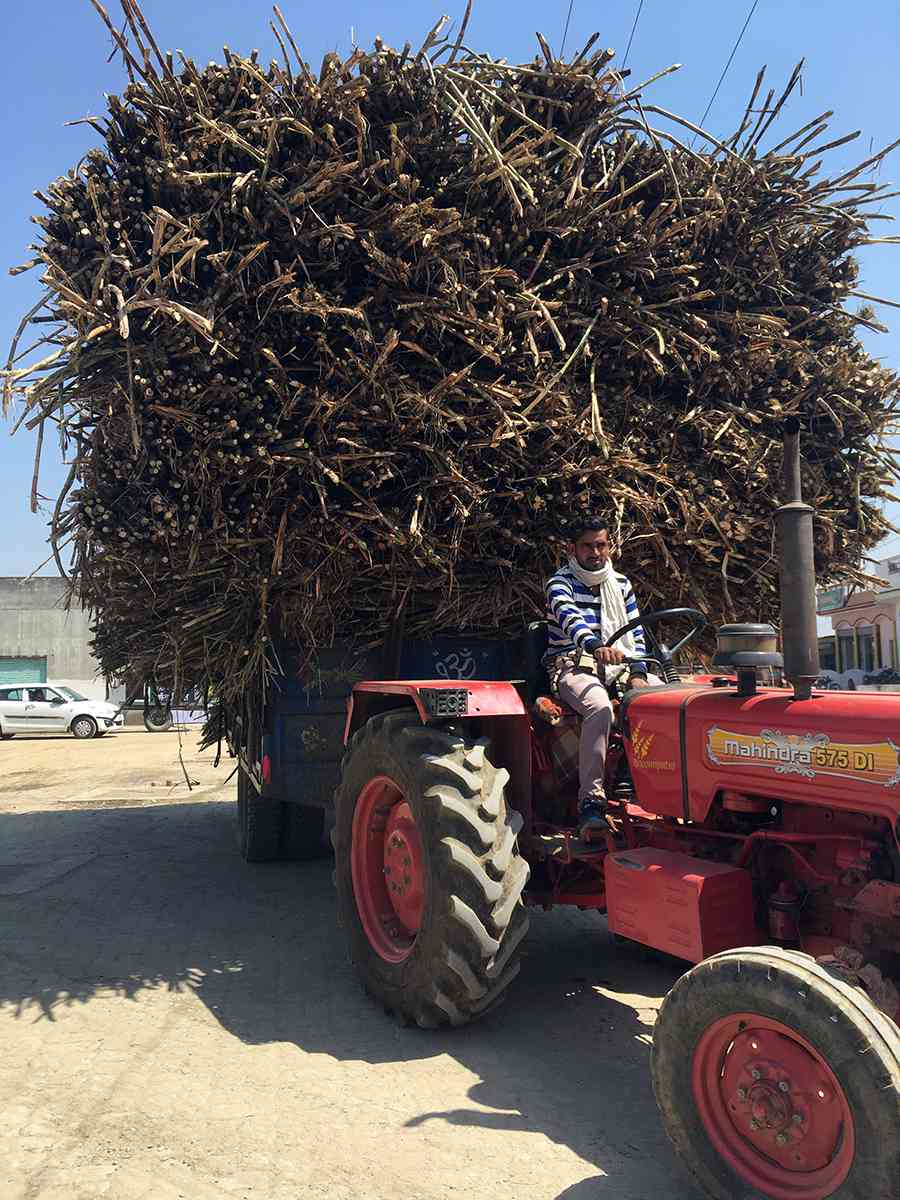 A tractor carrying sugarcane in Muzaffarnagar. Sugarcane dominates the landscape of western Uttar Pradesh. (Photo credit: Akash Bisht).