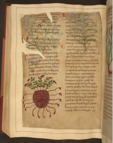 A page from 'Cotton MS Vitellius C III' (Image courtesy: British Library).