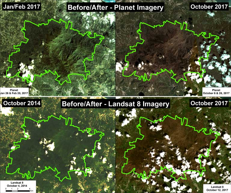 Satellite images of El Yunque National Forest, Puerto Rico, before and after Hurricane Maria caused severe damage to the forest on 20 September 2017. Leaves and branches were stripped from trees, and trees were downed, transforming the lush tropical landscape. Top panel: high-resolution imagery from Planet. Bottom panel: medium-resolution imagery from NASA/USGS. Imagery analysis: MAAP, a project of Amazon Conservation Association