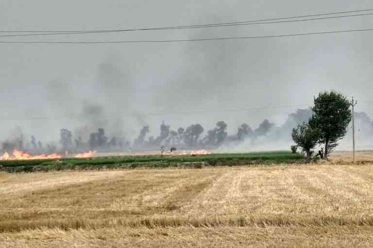 Farmers burning their stubble to prepare their fields for the next crop. Photo credit: Mayank Aggarwal