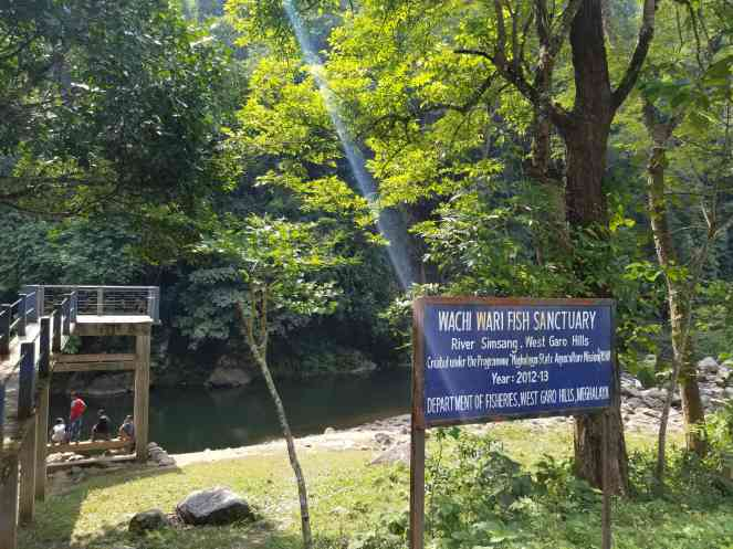 Wachi Wari Fish Sanctuary on the Simsang Photo credit: Parineeta Dandekar