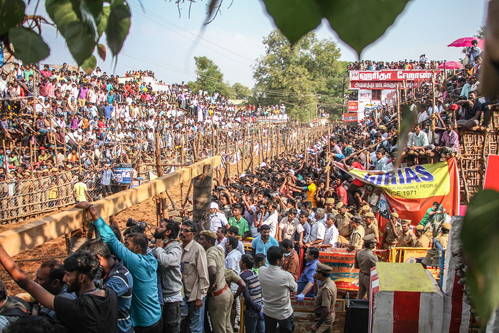 Thousands of people from across the state and some international tourists fight for space at the makeshift galleries, as the police control the crowds to avoid a stampede.