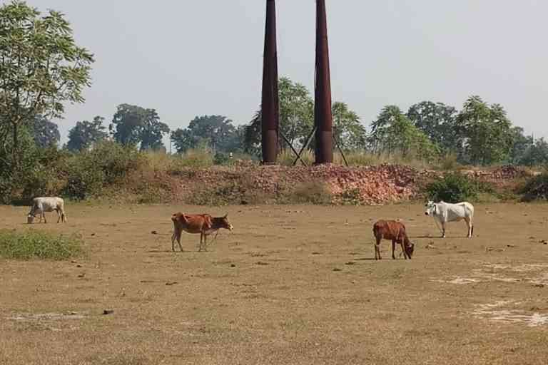 Around 40 brick-kilns, most of them illegal, in about 20 villages in McCluskieganj are harming the lives of the residents. Photo Credit: Gurvinder Singh