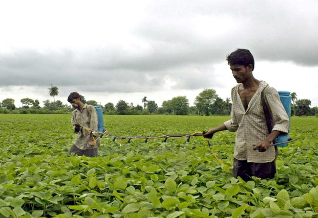 Farmers spray pesticide on their soya plants. Credit: Reuters