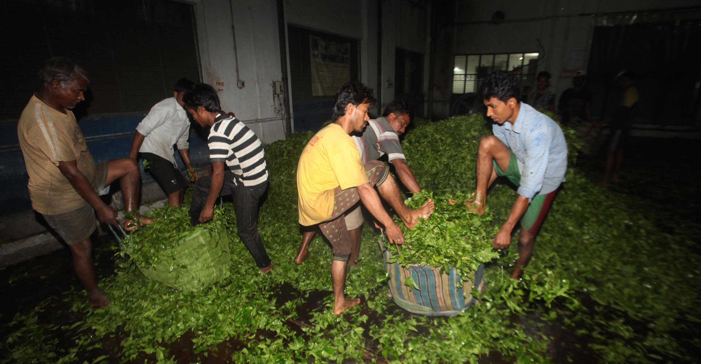 The tea industry provides employment to a large number of people.