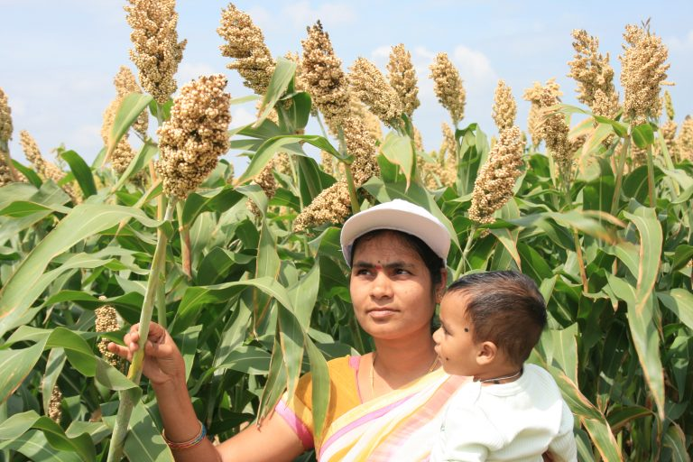 A woman farmer admiring the new biofortified sorghum variety Parbhani Shakti. Photo Credit: Researchers