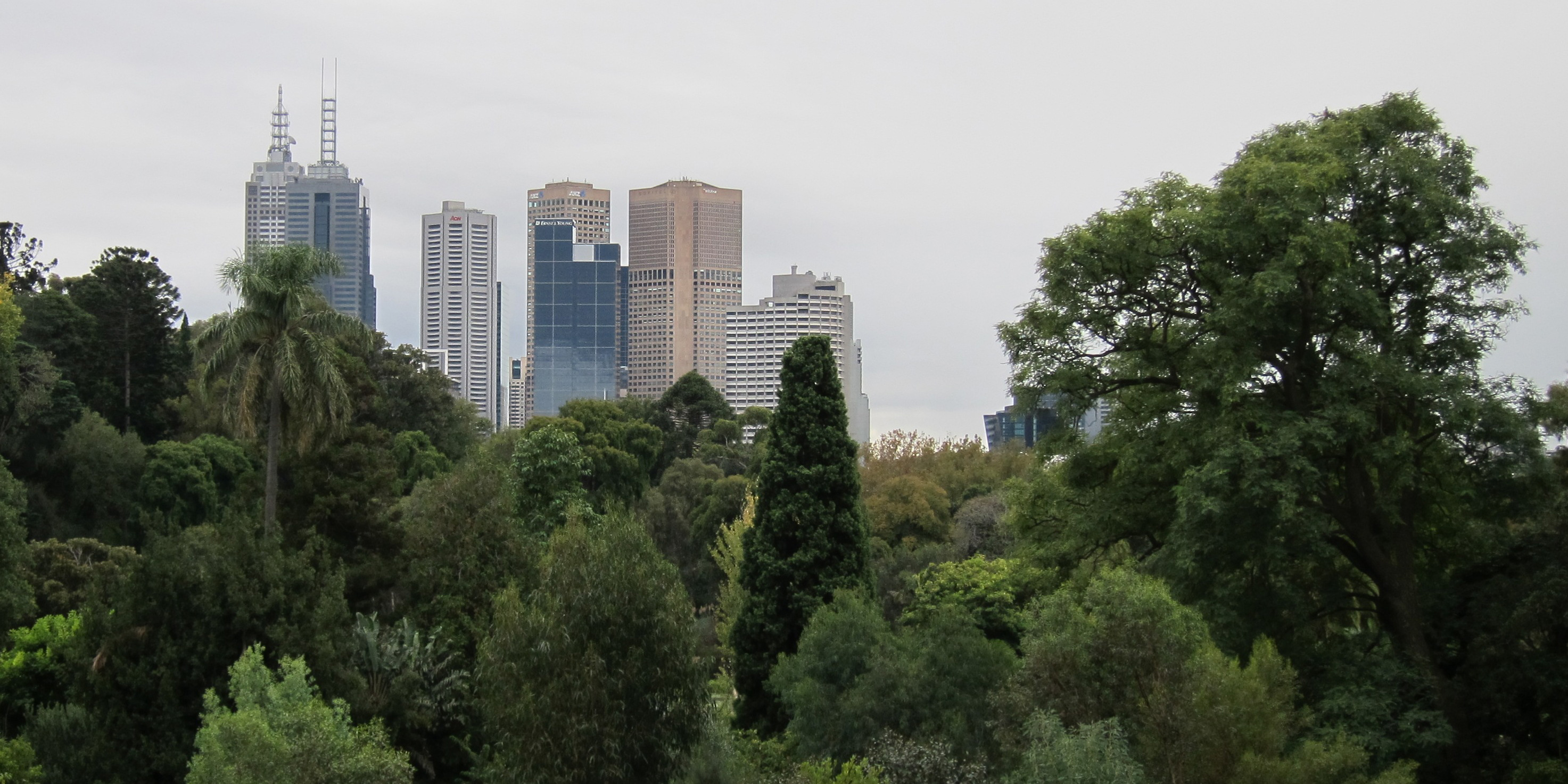 Melbourne is using urban trees to bring down temperatures. In 2012, the city council launched an ambitious project to double the tree canopy cover by 2040, by planting about 3,000 new trees every year. Photo credit: Satanoid/Flickr