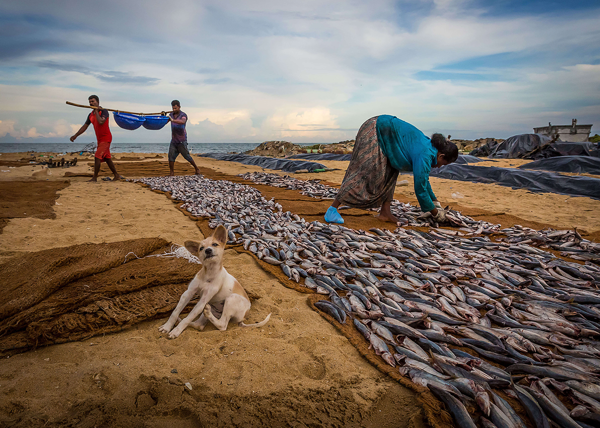 'A labouring fisherman', by Wei Tao. Sun fish laid out to dry in Negombo beach in Sri Lanka. © Wei Tao, China, Shortlist, Open, Travel (Open competition), 2018 Sony World Photography Awards.