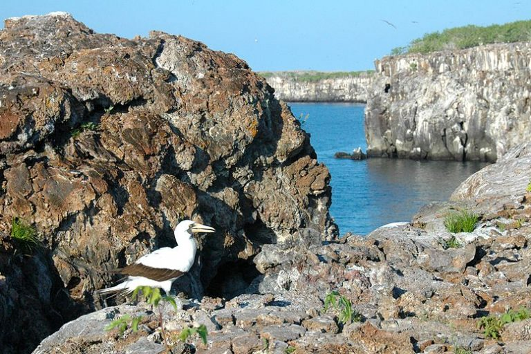The Isla Genovesa Booby Sanctuary, Tower Island, Galapagos World Heritage Site. Photo credit: David Broad/ Panoramio/Wikimedia Commons [Licensed under CC BY 3.0]