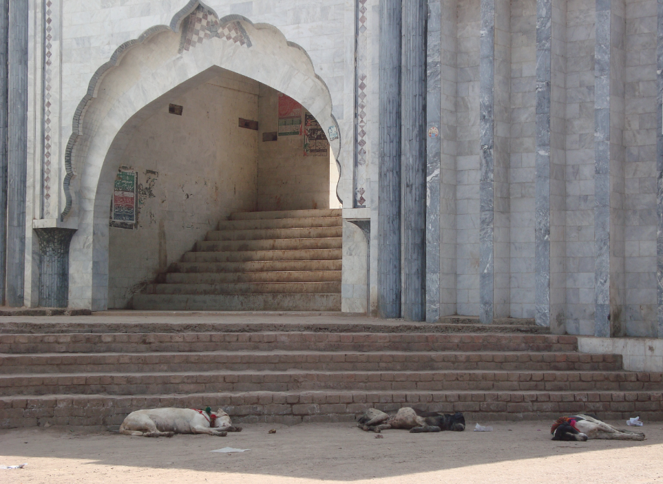 Dogs sleep outside the shrine of Peer Abbas in Pattoki. (Credit: Haroon Khalid)