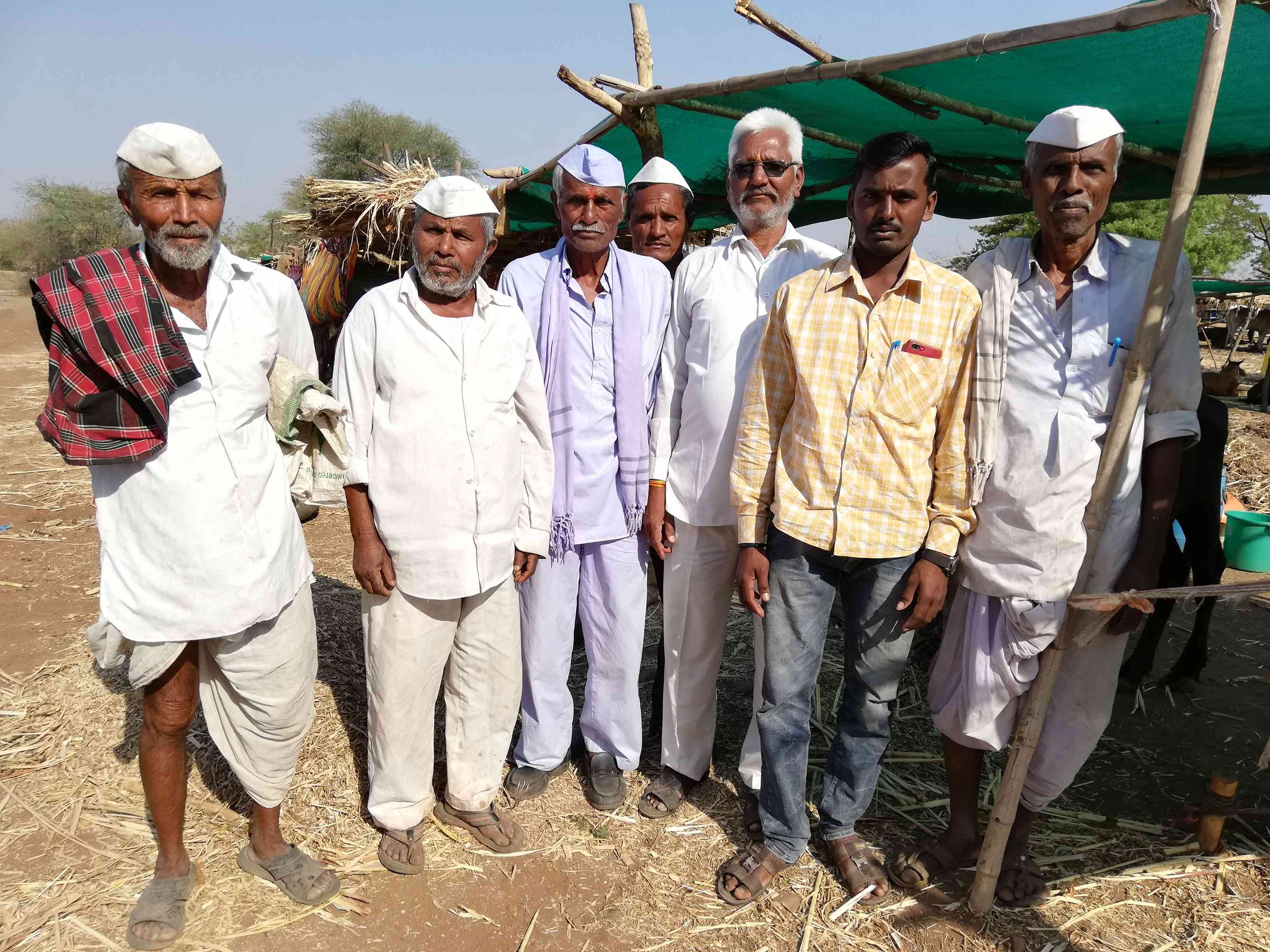 Kachrusaheb Rathod, right, and Hasrubhai Sanap, third from right, at the cattle camp in Limba Devi. Photo credit: Mridula Chari