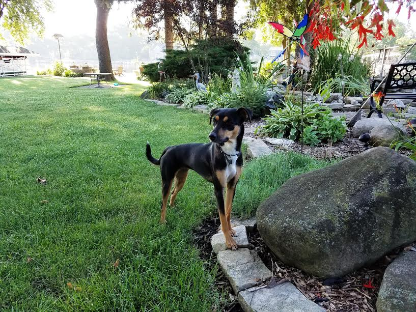 Roxy at her new home in Illinois. Image credit: Pam Spain