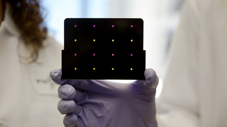 Molecular biology technology has made possible simple diagnostic tools, like this paper-based test for Zika. Areas that have turned purple indicate samples infected with the virus. Wyss Institute at Harvard University, CC BY-ND