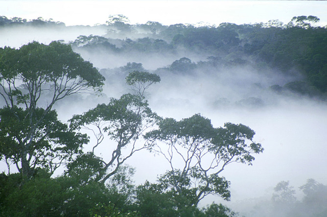 A dawn mist rises over the Amazon rainforest. William Laurance