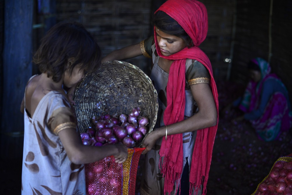 Tarachand's daughters lend a hand in sorting and packaging the onion.