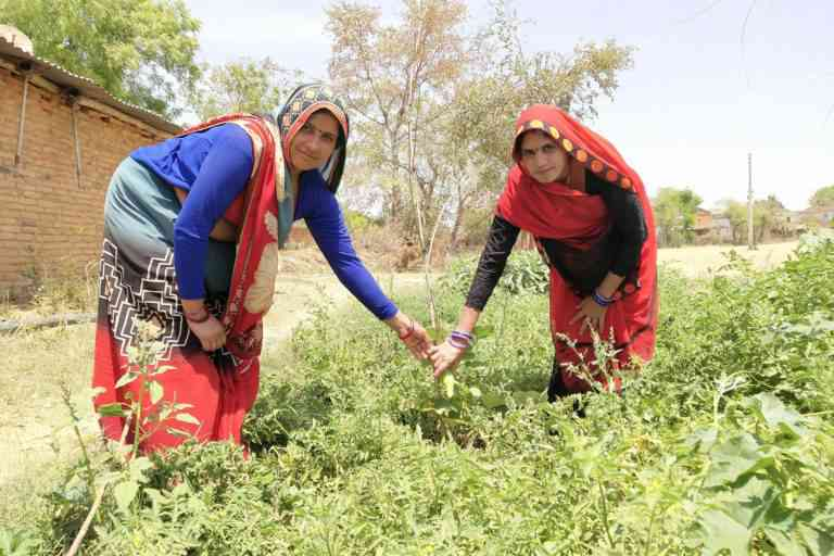 Water availability and awareness have encouraged many villagers to grow vegetables in their backyard and in unused small patches. Photo credit: Kanchan Srivastava