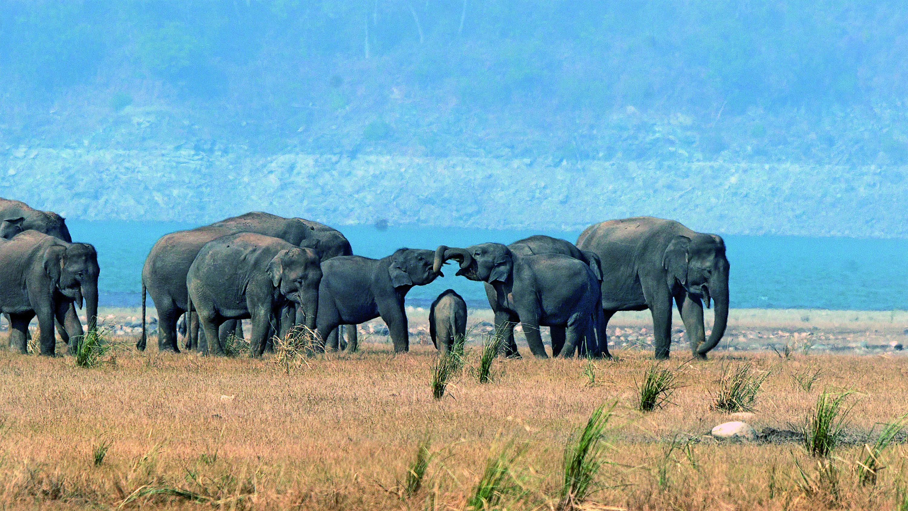 """'Mammoth Gateway' by Karthick Kumar captures an affectionate moment between elephants at Uttarakhand's Corbett Tiger Reserve. """"On his very first trip to this forest of flowing rivers, blue waters and sal-dappled glades, Karthick Kumar sighted an elephant herd with nearly 50 individuals moving towards the Ramganga river,"""" said the Sanctuary Nature Foundation. """"Spending more than two hours with these gentle giants enabled him to document such heart-warming moments."""""""