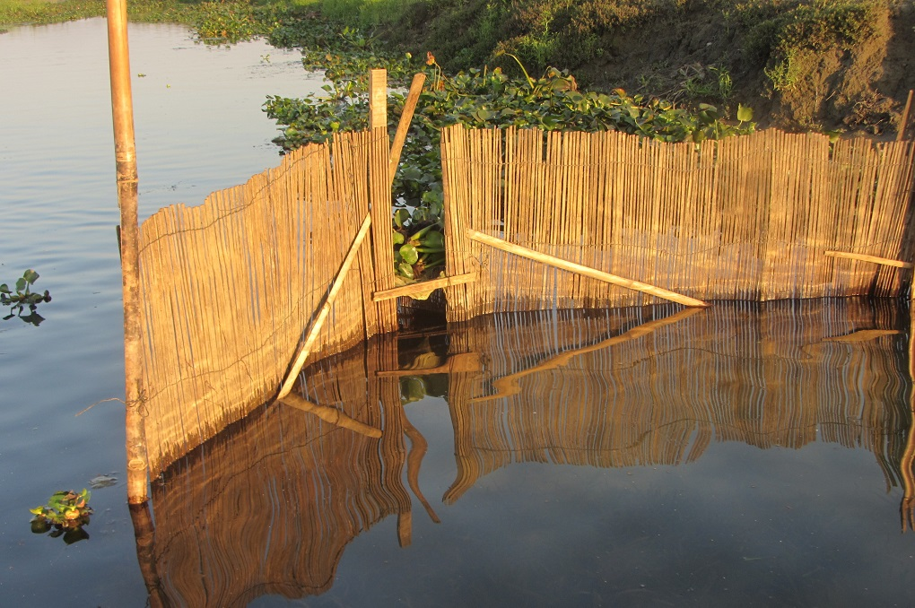 Ghana, the local term for this hand-made bamboo snares for catching small fish. Fish enter from the small gap in the front but cannot go out; the open back is covered with water hyacinth shrub to not allow fish to escape. Photo Credit: Nivedita Khandekar