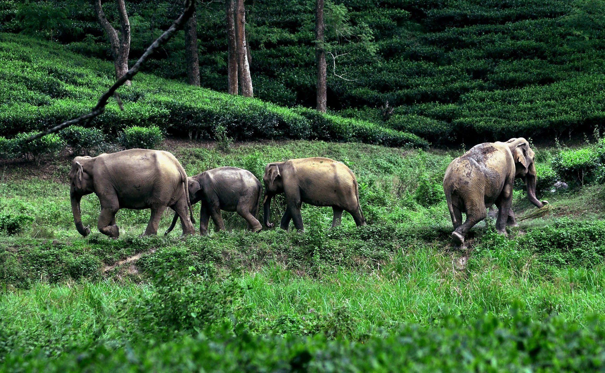 Elephants take shelter on higher ground at the Kaziranga National Park. (Credit: PTI)