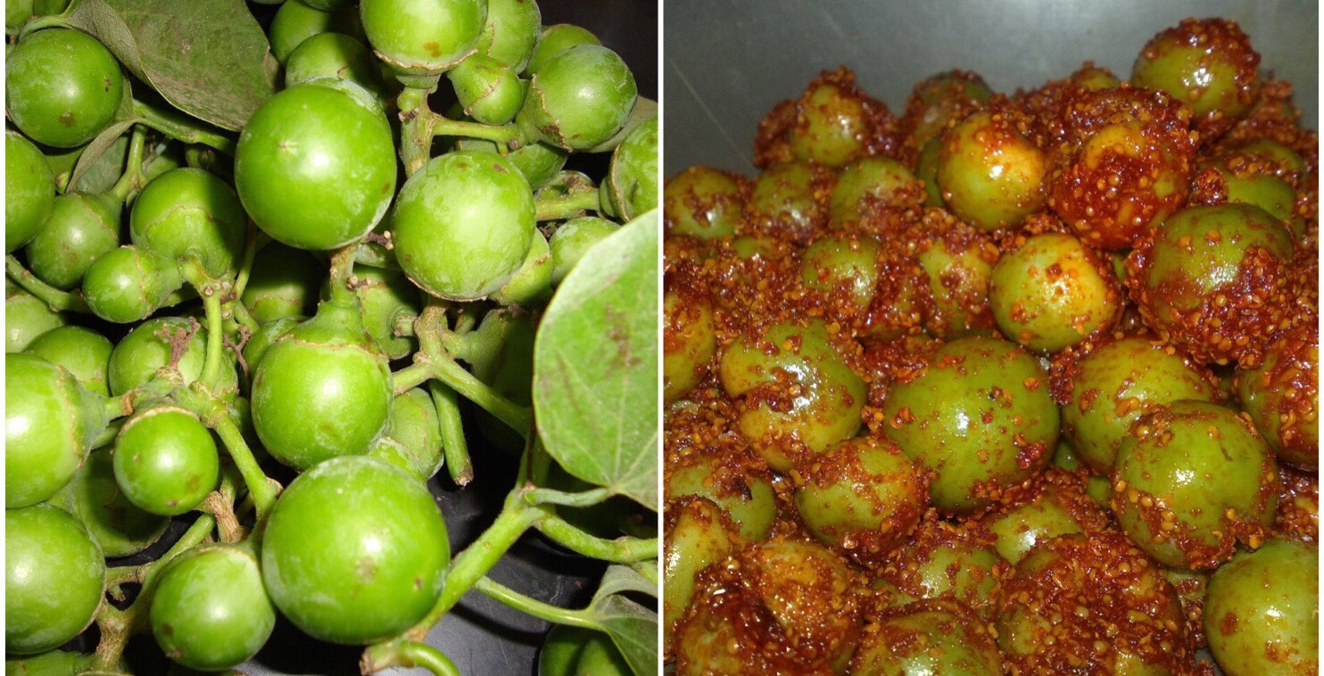 Lasoda, Or The Indian Cherry, Is Apt For Pickling Credit: Wikimediamons