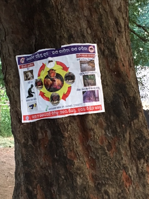 Poster about Japanese encephalitis transmission in a village in Malkangiri. Photo: Priyanka Vora.