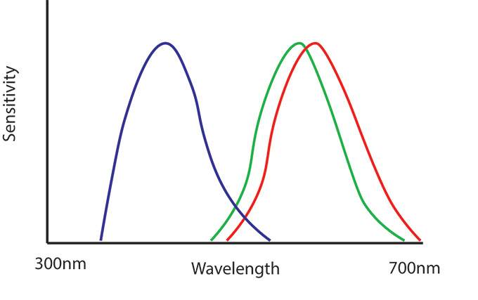 Figure 3. The spectral sensitivities of the colour cones of a human. Reproduced based on Osorio & Vorobyev, 2005