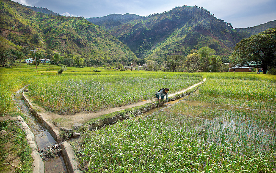 Distribution Irrigation Channels from kuhl water agricultural fields. Photo credit: Akshay Jasrotia