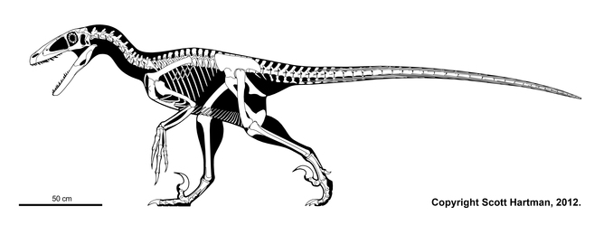 Deinonychus. Source: Scott Hartman, Author provided