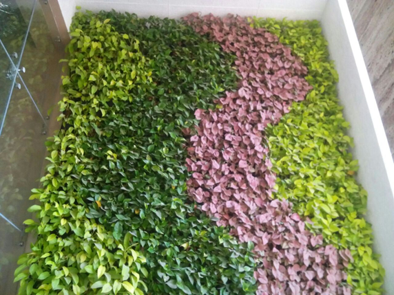 Living green walls India should look to vertical gardens to