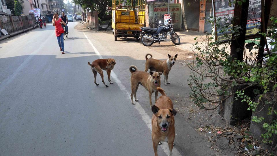 'If you speak of dogs being aggressive, even ferocious, an influential breed of animal lovers invariably suggest it is the fault of humans in some fashion.' Photo credit: HT