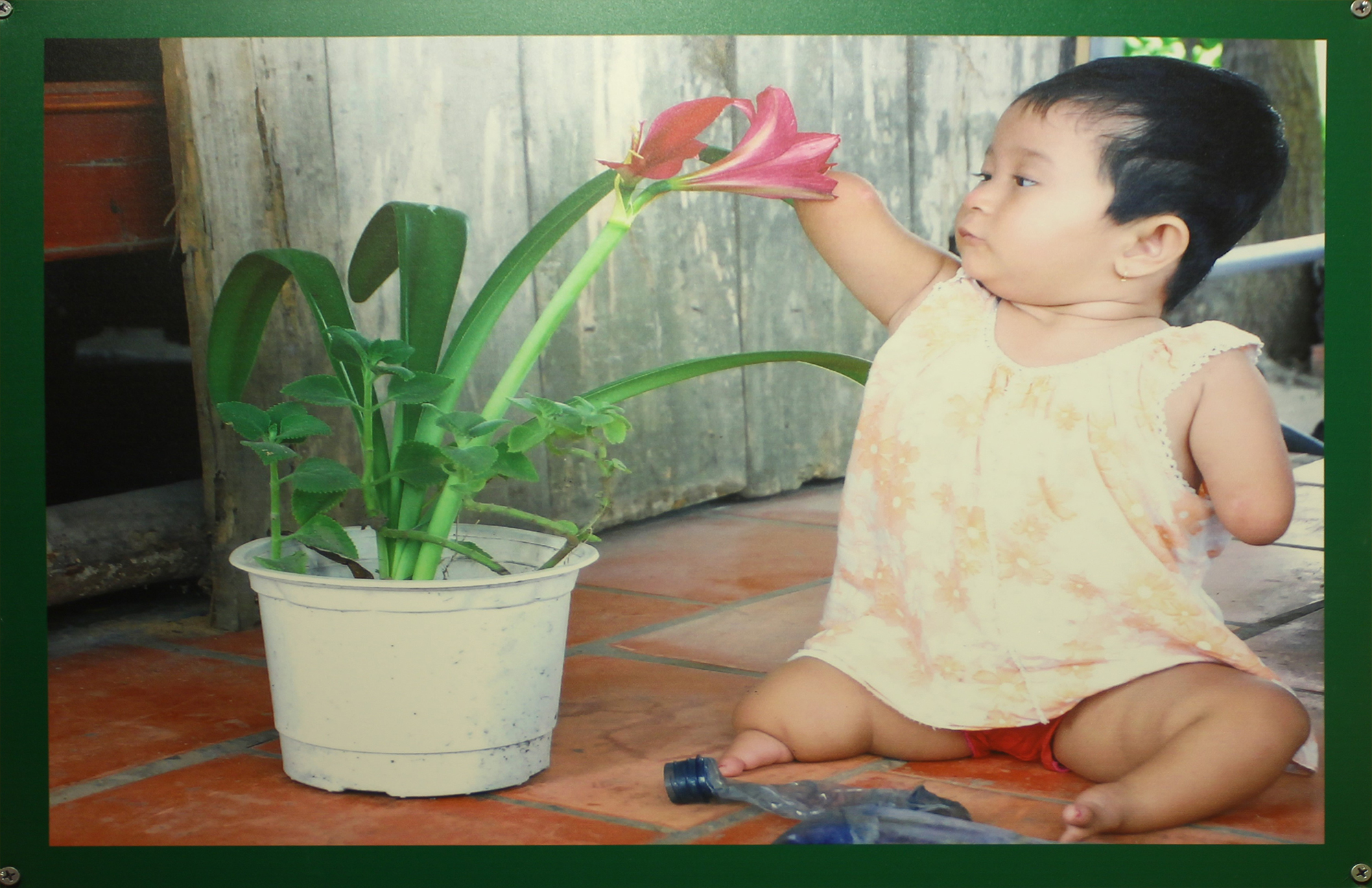 A young Hoai, probably two years old, reaches out for a flower. (Image: War Remnants Museum)