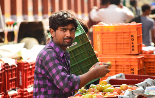 A wholesaler inspecting the tomatoes at the Agriculture Produce Market Committee market in Kolar, Karnataka. Image Credits: Prabhu Mallikarjunan