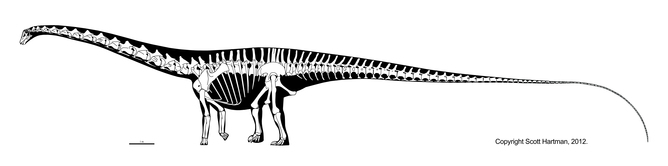 Diplodocus. Source: Scott Hartman